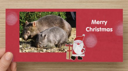 Red wombat christmas card