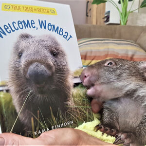 Welcome Wombat Book
